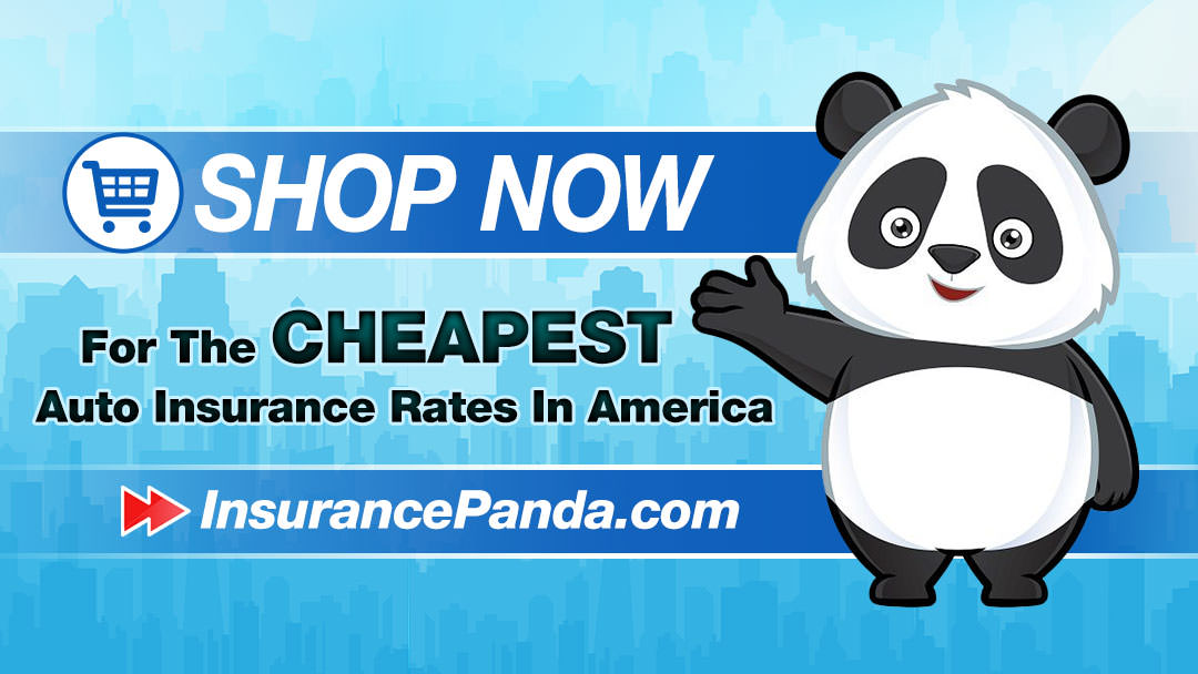 Insurance Panda Banner Design For Google Plus